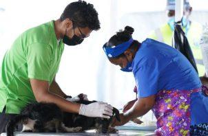 La vacunación de perros y gatos se desarrolló en las instalaciones de Ingeniería Municipal.