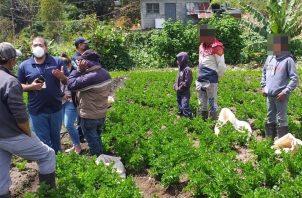 A los padres y al encargado de la finca se les orientó sobre la prohibición del trabajo infantil. Foto: José Vásquez