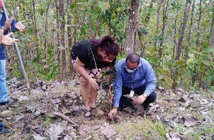 Julián González, hijo del profesor Norato, junto a la directora regional de Panamá Norte, Damaris Herrera, sembraron un árbol. Foto de cortesía