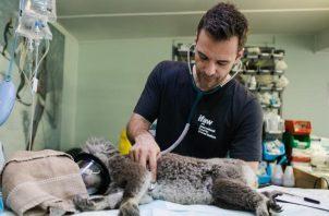 De unos 500 profesionales de la comunidad veterinaria, el 70% indicó que su jornada de trabajo ronda las 60 horas semanales. Foto: Ilustrativa / Pexels