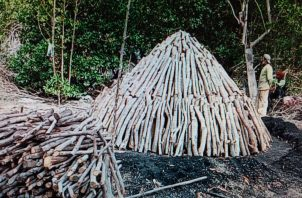 Se encontraron hornos para la elaboración de carbón con madera de mangle rojo y blanco. Foto: Eric A.Montenegro