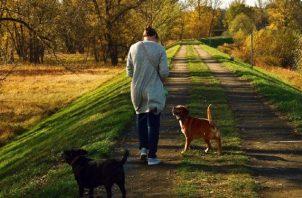 Cuando se va a pasear al can se debe llevar agua y bolsas para recoger los desechos y no afectar el ambiente. Foto: Ilustrativa / Pixabay