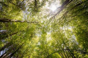 Más de 1,600 millones de personas dependen de los bosques. Ilustrativa / Pexels