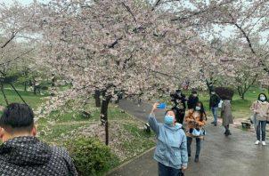 El Jardín de los cerezos del Lago del este de Wuhan.