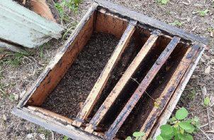 Utilizaron el insecticida 'hormitox' para acabar con las abejas de unas 19 colmenas.