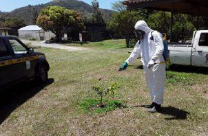 La Dirección de Sanidad Vegetal del Mida informó que esta bacteria se detectó en el traspatio de una residencia.
