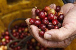 Colombia es el tercer productor mundial de cafe. EFE
