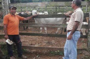 Al formar parte del  Sistema Integrado de Gestión Agropecuaria de Panamá, los productores colonenses tendrán un mejor acceso a los programas. Foto: Diomedes Sánchez