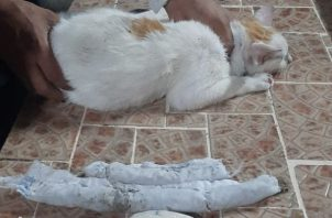 El gato buscaba ingresar al penal de Nueva Esperanza.