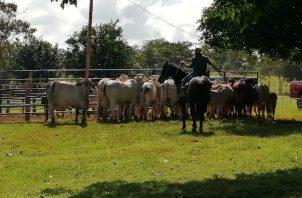 Los ganaderos hicieron una serie de sugerencias para evitar el cuatrerismo. Foto: Eric Montenegro