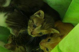 Los cinco gatos fueron salvados por las unidades de los Linces de la Policía Nacional. Foto: José Vásquez
