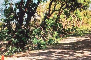 La poda y tala de los árboles de forma indiscriminada causó gran malestar en Guararé. Foto: Thays Domínguez
