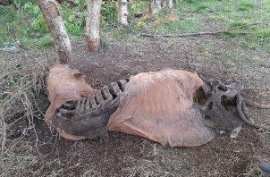 Se pide a los ganaderos realizar las denuncias correspondientes para atrapar a los cuatreros. Foto: José Vásquez
