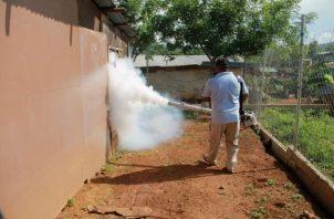 Se recomienda mantener el área limpia y fumigar.