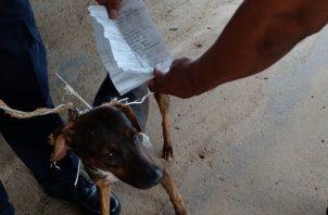 El perro fue captura en La Joya.
