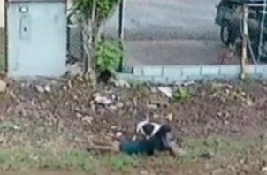 En el video de seguridad de una residencia cercana se aprecia como el perro ataca a la señora al pasar por el lugar. Foto: Mayra Madrid