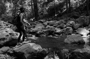 Tal vez sea hora ya de comprender, de estudiar y respetar ese tesoro de la vida que se encuentra en esas pocas selvas vivas que nos quedan. Foto: EFE.