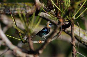 Panamá tiene una biodiversidad muy variada. Foto: EFE