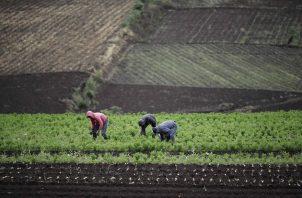 Pobreza, desempleo y seguridad alimentaria están impactados. EFE