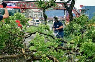 Bomberos atienden caídas de árboles y desprendimiento de techos en Panamá y Panamá Oeste. Foto: Cortesía Bomberos de Panamá