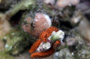Daños en corales.
