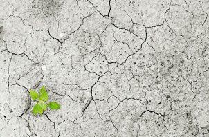 'Actúa ahora' es la campaña de Naciones Unidas destinada a la acción individual frente al cambio climático y a la sostenibilidad. ONU