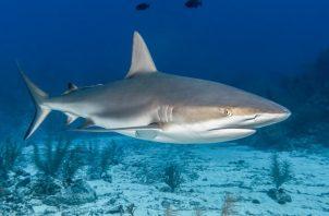 Los expertos apuestan por conocer mejor a los tiburones para evitar los datos erróneos. Freepik/Ilustrativa