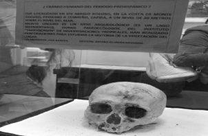Cráneo humano del Periodo Prehispánico, localizado en un abrigo rocoso, en la Costa de Monte Oscuro, próximo a Cermeño, Capira. Monte Oscuro es un sitio arqueológico donde el Smithsonian investiga la vegetación del lugar. Foto: Cortesía del autor.