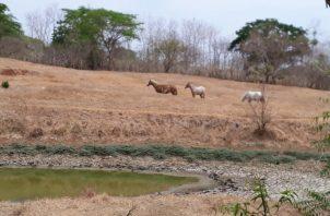 Todos los años hay sequía al final de la estación seca en el denominado Arco Seco.