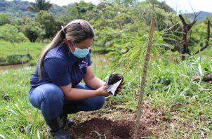 Se plantaron árboles maderables, frutales, de protección de fuentes hídricas y ornamentales de 38 especies. Foto: Mayra Madrid
