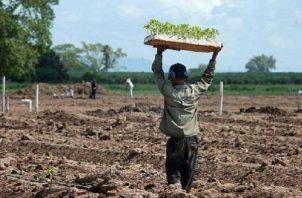 Aunque se notó una disminución de niños trabajando en fincas agrícolas, todavía persiste esta práctica, reconocieron las autoridades. Foto ilustrativa