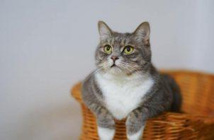 La acumulación excesiva de grasa se ve reflejada en el peso de la mascota. Foto: ilustrativa / Pexels