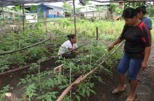 Mediante el proyecto de Transferencia de Oportunidades en el Área Rural, se ha entregado apoyo financiero a 200 mujeres para que desarrollen pequeños proyectos agrícolas y no agrícolas.