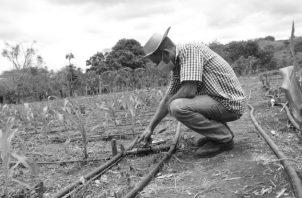 El accionar se ve entorpecido por decisiones que están haciendo sucumbir la economía, salvo el sector agropecuario que cuenta con una política de subsidios y sistemas de financiamiento bancario a nivel gubernamental. Foto: Cortesía.