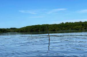 El sistema de pesca con estaca de mangle no está permitido en la regulación vigente, ya que además afecta la navegación. Foto. José Vásquez