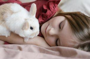 Los conejos son cariñosos y un excelente compañero para los niños. Foto: Ilustrativa / Pexels