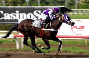 Laurentino López, luce el peculiar estilo de montar de los jinetes panameños, sobre el caballo Tarpan Candy, en una carrera de 1,700 metros. Foto: Hipódromo