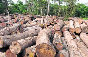 En Panamá, la tala ilegal de árboles y el tráfico de especies en vías de extinción, son los delitos más comunes. Foto: Archivo