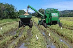 Durante un ciclo agrícola 2021-2022 el Gobierno Nacional desembolsará en compensación para el arroz unos 65.3 millones de dólares y con este aumento se adicionarían 18 miillones de dólares.