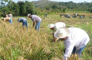 Referente a los pagos por el arroz adquirido, un total de $6 millones 021 mil 186.48 fueron cancelados en dicho periodo a 234 arroceros.