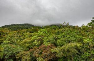 La Reserva Hidrológica de Fortuna albergan casi tantas especies de árboles como todo EE.UU. Foto: Cortesía / Steve Paton