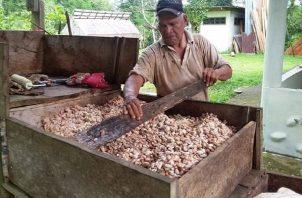 Los precios internacionales del cacao han mejorado, razón por la cual existen mejores posibilidades para los productores de este rubro de optimizar sus niveles de vida. Foto: Eric Montenegro