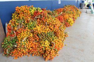 Hasta el momento no se ha definido el valor económico del producto decomisado al ciudadano de nacionalidad panameña quien reside en el distrito de Bugaba. Foto. José Vásquez
