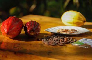 El cacao en grano producido en el país se ha incrementado. Cortesía