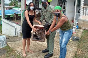 Los residentes manifestaron que solo cuidaron del animal, pero no dieron a conocer la procedencia del mismo. Foto: Diomedes Sánchez