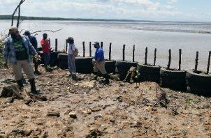 Levantan un muro con llantas y residuos de construcción, aunado a la siembra de plantas de mangle, que permita disminuir las afectaciones y disminuir el impacto del mar en tierra firme. Foto: Thays Domínguez