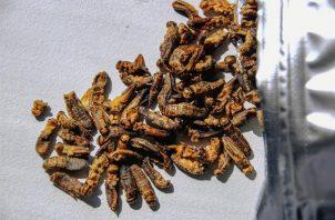 Portugal aprobó el consumo de insecto como nueva fuente de proteínas.