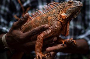 Crisis económica asedia a parque de reptiles en la India. Foto: EFE