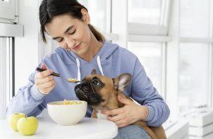 Algunos alimentos pueden ser tóxicos para su organismo. Foto: Ilustrativa / Freepik