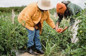 'Las juventudes están en la primera línea para construir los sistemas alimentarios del futuro', afirma Adoniram Sanches Peraci. Foto: Ilustrativa / Pexels